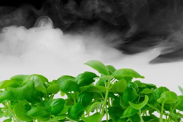 Fogponics: A New Spin on Aeroponic Gardens