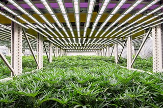 Fohse: Revolutionizing the Grow Light Industry