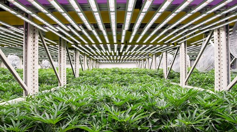 When the innovative team at Fohse saw a gap in the grow light market for cannabis plants, they seized the opportunity and ran with it.