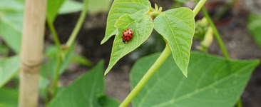 Troubleshooting in the Garden: The Next Best Thing