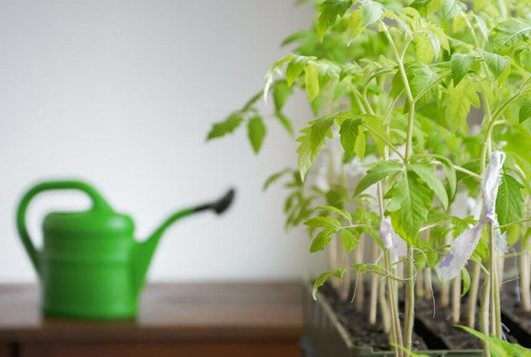 10 Best Indoor Garden Watering Practices