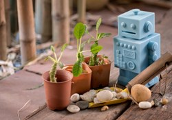 Absentee Growing: How to Maximize a Garden's Growth from Out of Town
