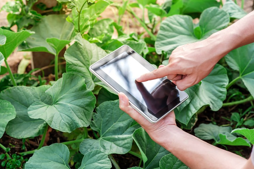Gardening for Geeks: By the Numbers
