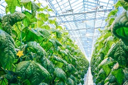 Dialing In Your Greenhouse
