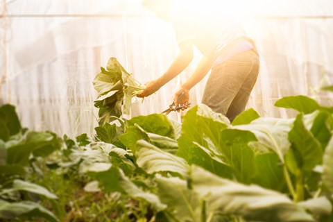 A greenhouse is the perfect place to germinate seeds and allows you to extend the natural growing season. So if you want to grow vegetables...