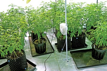 Balmy Breezes: How Air Circulation Affects Temperature, Humidity and CO2 in Your Growroom