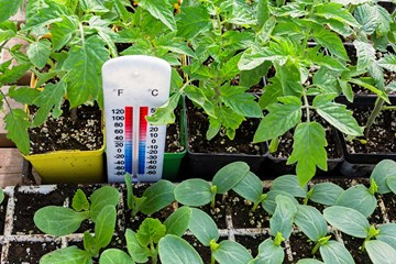 The Right Temperature for Growing Clones