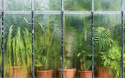 Plants in a humid greenhouse behind glass covered in condensation.