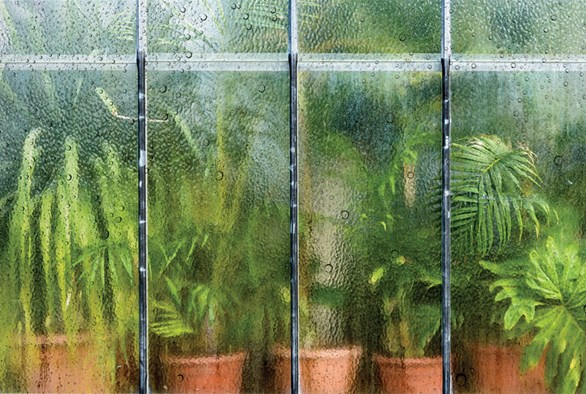 Humidity: The Often-Overlooked Climate Factor That Could Be Hurting Your Plants' Growth
