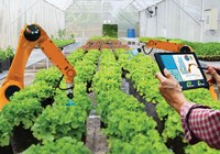 Artificial Intelligence and Controlled Environment Agriculture