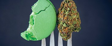 A cannabis bud and macaron cookie on a fork.