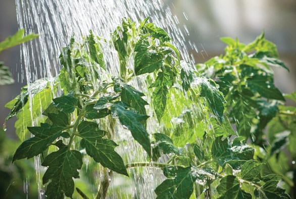 The Impact of Hard and Soft Water in the Growroom