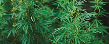 5 Things To Know Before You Plant Hemp