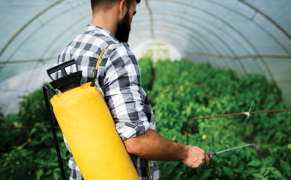 Photo of a man spraying organic pesticides in a greenhouse.
