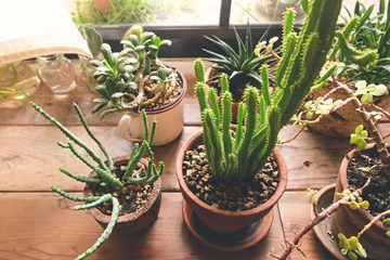 Are Your Plants Getting Enough Light?