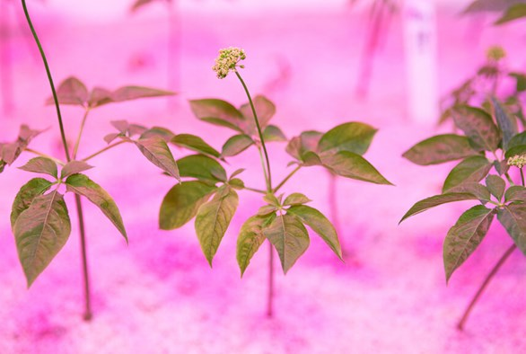 Don't Try to Grow These Plants Hydroponically