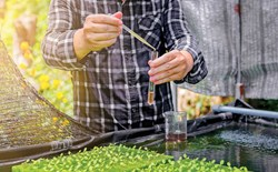 Grower in a hydroponic garden using a dropper to add a sample of nutrient solution to a vial.