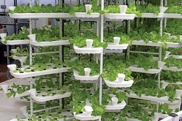 The Best Hydroponic Systems for Space Optimization