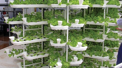 If you're dealing with a small space for your hydroponic setup, Lynette Morgan shares her insights on how to optimize that space with the...