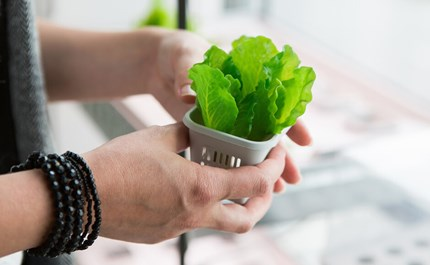 Choosing Your First Hydroponic System