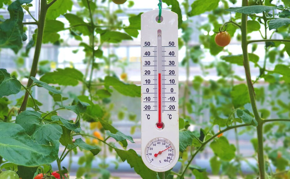 Thermometer and hygrometer hanging inside an indoor garden grow room.
