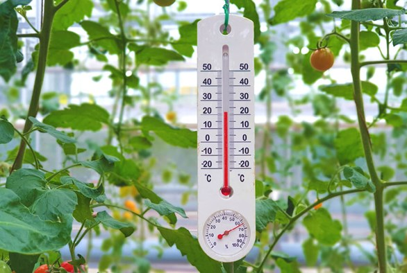 The Best Temperatures for an Indoor Grow Room
