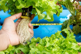 Infused With Life: How Microbes Work in Your Plant Growing System
