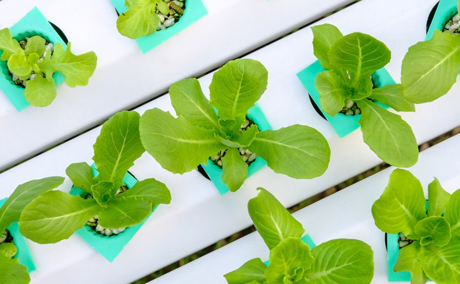 Perlite Revisited for Hydroponics Gardens