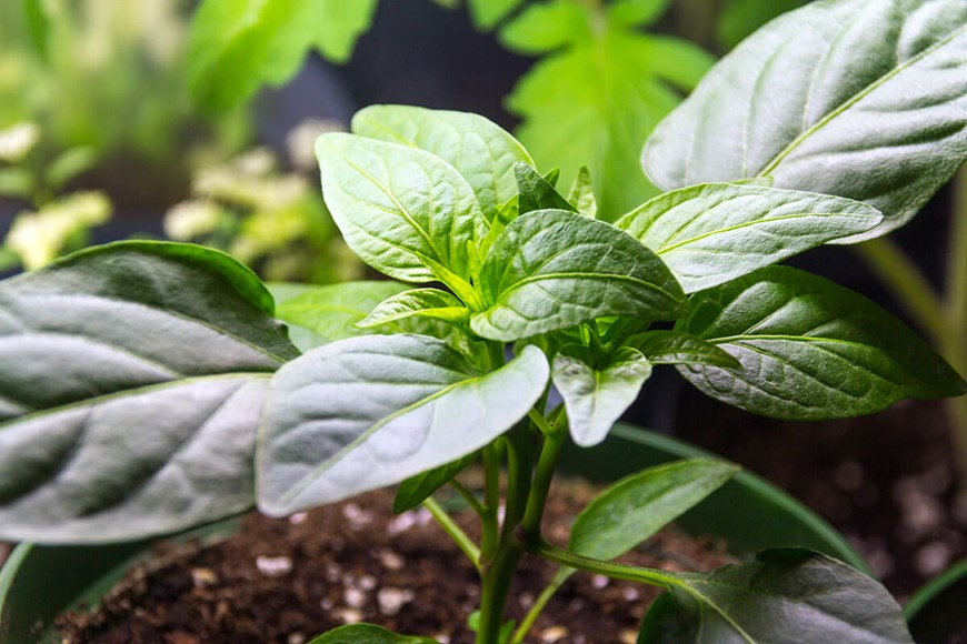Tips for Improving the Performance of Your Indoor Garden