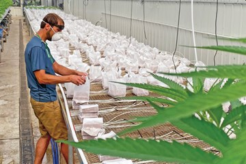 Cultivators and Property: Maximizing Facility Design