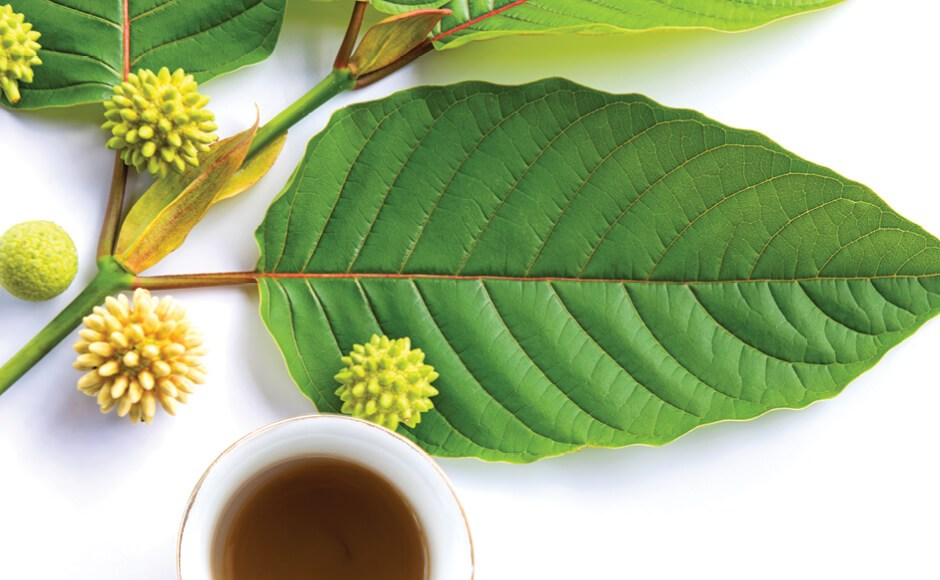 The Healing Powers of Plant Medicine