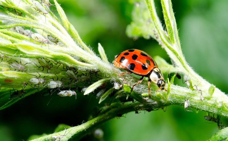 Integrated Pest Management (IPM) for Small-scale Growers