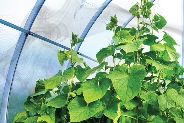 A Closer Look at How Carbon Dioxide Affects Plant Growth and Yield