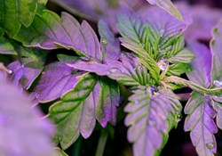 10 Mistakes to Avoid When Using LED Grow Lights