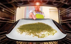 Hand placing a pan of ground cannabis into an oven to decarboxylate.