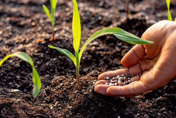Understanding Soil Additives: What To Add and When