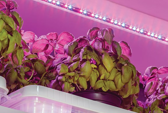 Need a Light? Advice on Buying Grow Lights for First-Time Buyers