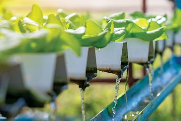 Looking for Leaks in Hydroponic Equipment
