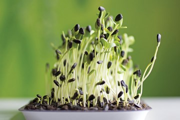 Get Snackin': Salty and Savory Hydroponic Crops