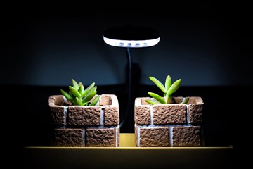 The Myth of Night Light and its Impact on Plants