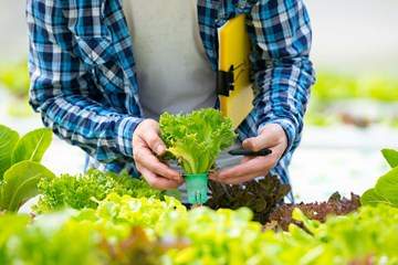 Optimal Nutrient Reservoir Parameters: Understanding the Heart of Your Hydroponic System