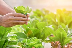 Organic and Hydroponic Food Safety