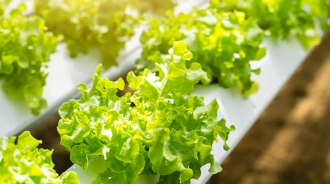While designed for indoor growing, outdoor hydroponic systems can provide solutions to problems such as diminishing arable land, water...