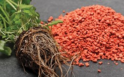 Phosphorus: An Essential Element for Plants