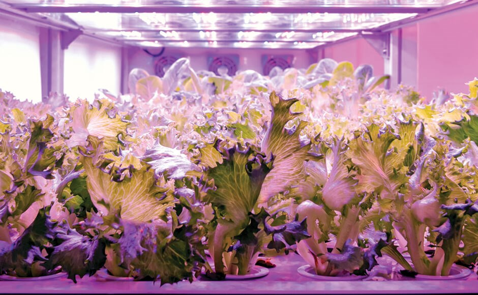 Photoperiod Effects on Hydroponic Crops