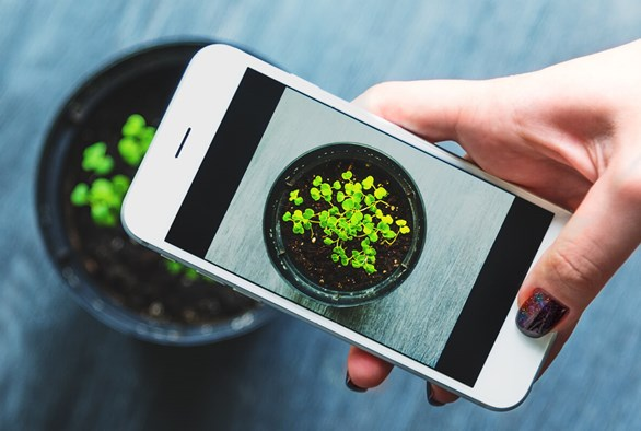 Why You Should Be Taking Photos of Your Plants