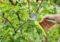 Techniques for Proper Pruning: Part One
