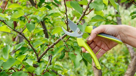 While it may be tempting to take out the shears and hack away with abandon, read this article first to learn the when's and how's of...