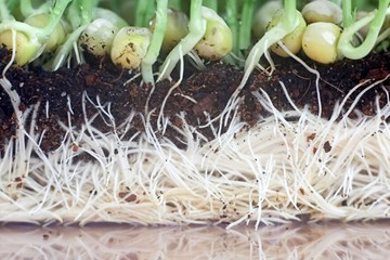 Strengthening Your Plant's Roots