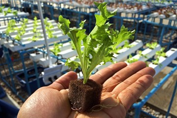 The Various Forms of Rooting Hormones & Organic Rooting Stimulants